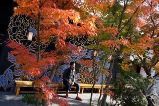 京都,観光,旅行