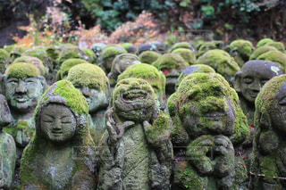 京都,観光,苔,嵯峨野,複数,愛宕念仏寺,羅漢