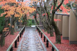 秋,紅葉,京都,赤,観光,入口,鷹ヶ峰,光悦寺
