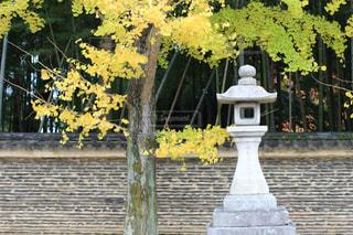 秋,京都,黄色,観光,イチョウ,塀,竹林,参道,灯籠,今宮神社