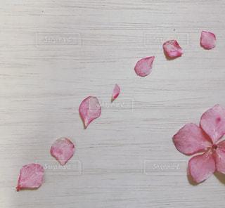 テーブルの上のピンクの花の写真・画像素材[1793753]