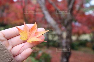 花を持っている手の写真・画像素材[936750]