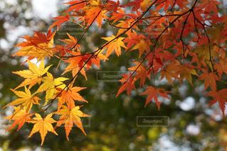 近くの木のアップの写真・画像素材[891944]