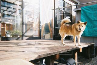 犬と暮らしとの写真・画像素材[977353]