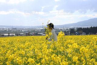 菜の花畑と女の子の写真・画像素材[1950384]