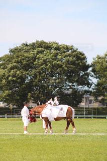 相馬野馬追 行列の写真・画像素材[2448791]