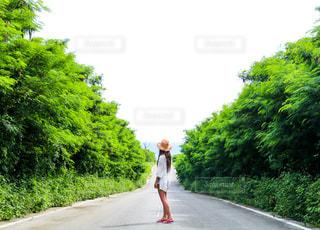 自然,沖縄,女,道,後姿
