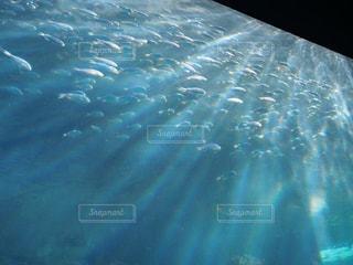 水面下を泳ぐ魚たちの写真・画像素材[909010]