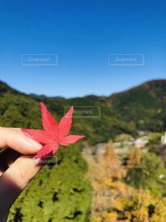 赤い花を持っている手の写真・画像素材[1636961]