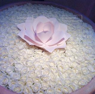 真っ白なバラ数々 - No.926905