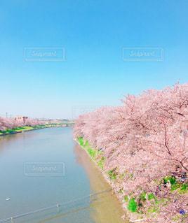 お花見日和の写真・画像素材[1098717]