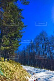 入笠山登山道の写真・画像素材[1795954]