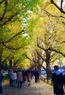 いちょう並木を沢山の人が散歩中の写真・画像素材[1827000]