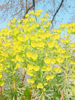 近くの花のアップの写真・画像素材[1885759]