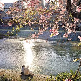 花,桜,京都,観光,はな,鴨川