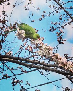 花,桜,鳥
