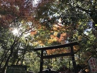 野宮神社の写真・画像素材[1641729]