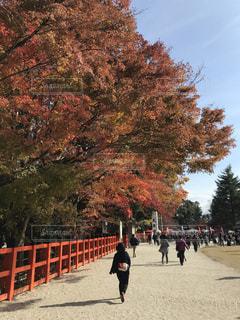 上賀茂神社の写真・画像素材[1641738]
