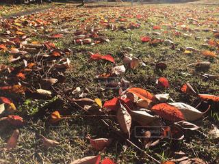 晩秋の公園の写真・画像素材[890540]