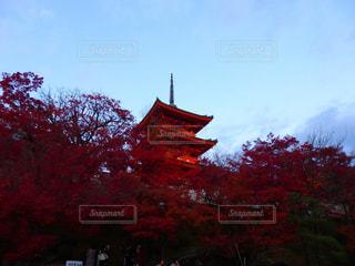 紅葉の奥に五重の塔🍁清水寺周辺にて。の写真・画像素材[908652]