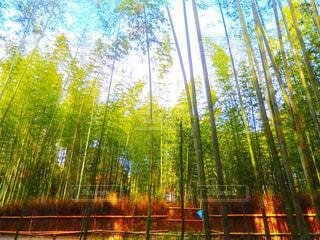 秋,絶景,京都,観光,旅行,竹林,KYOTO,嵐山,Travel,trip