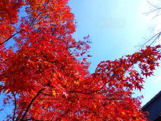 秋,絶景,紅葉,京都,もみじ,観光,旅行,KYOTO,参拝,Travel,trip,天龍寺