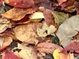 枯葉、足元の秋の写真・画像素材[891403]
