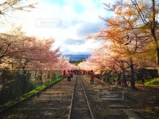 下り列車を走行する列車は森の近く追跡します。の写真・画像素材[907250]