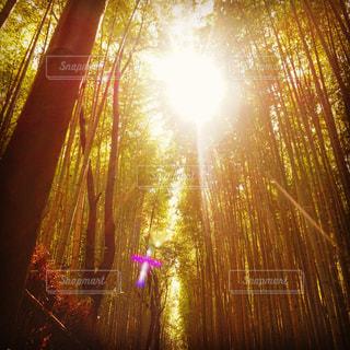 竹林道の写真・画像素材[916543]