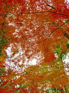 近くの木のアップの写真・画像素材[891086]