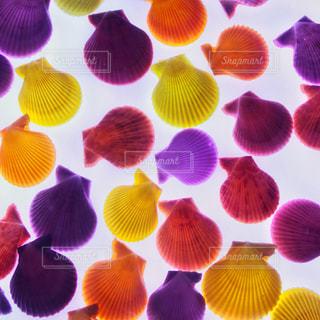 カラフル貝殻の写真・画像素材[905586]