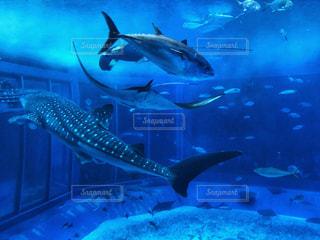 3匹の魚 - No.905593