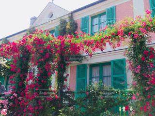ピンク,バラ,お花,薔薇,ガーデン