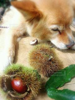 我が家の愛犬♡の写真・画像素材[1464425]