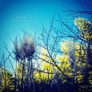 森の中の工場の写真・画像素材[891586]