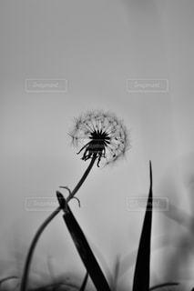 植物の花と花瓶の写真・画像素材[891591]