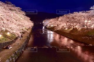 花,桜,夜桜,山口県,美祢市,厚狭川,花絶景