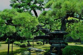屋外,京都,散歩,日本庭園,二条城