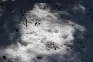 森の雪の写真・画像素材[892672]