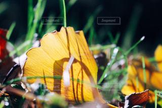 近くの花のアップの写真・画像素材[916663]