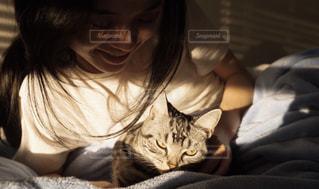 ベッドの上に座っている猫の写真・画像素材[1851934]