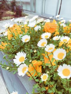 テーブルの上の花の花瓶の写真・画像素材[1904996]