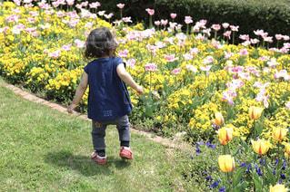お花に駆け寄る子供 - No.906025