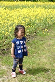 菜の花畑の女の子 - No.906031