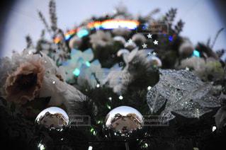 クリスマスツリーの写真・画像素材[914791]
