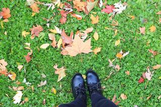 足元に転がる秋の写真・画像素材[892842]