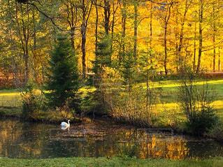 秋の湖での写真・画像素材[892857]