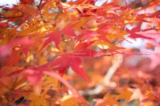 近くの木のアップの写真・画像素材[894636]