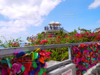 色とりどりの花のグループ - No.916496