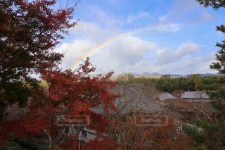 紅葉と虹の写真・画像素材[2513175]